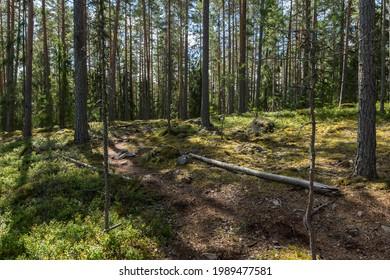 """The natural reserve """"Sanders gammelskog"""" outside Falun, Sweden."""
