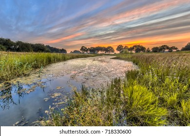 Natural river arm with swamp vegetation in marshland, typical dragonfly habitat in the Netherlands