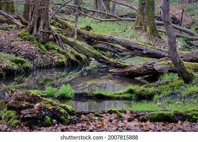 "Natural river landscape with deadwood and moss at the Brandenburg nature reserve ""Nonnenfliess"" near ""Forsthaus Geschirr"""