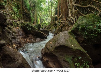 Natural river in tropical jungle forest of Sacred Monkey Sanctuary, Ubud, Bali, Indonesia. Jungle river pathway through big wet rocks in tropical rainforest. Jungle nature. Bali jungle river landscape