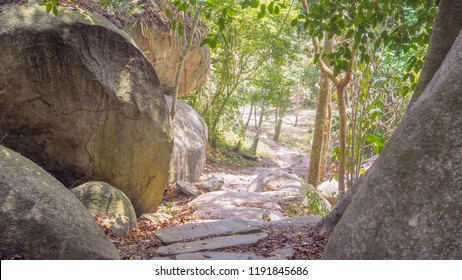 natural rocky path in a tropical forest in colombia