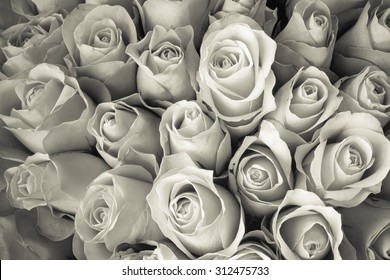 Natural Rose background. monochrome