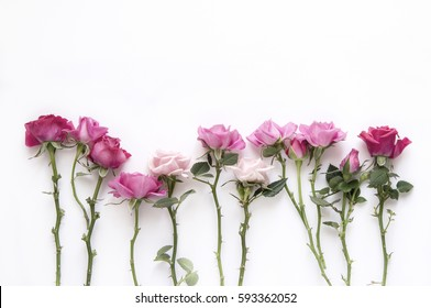 Natural roses on white background