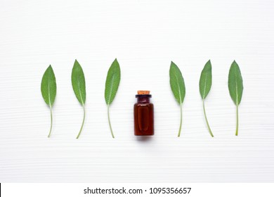 Natural sage essential oil with sage leaves on white  blackground.