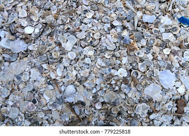 Natural sand and sea shells background on the coast.