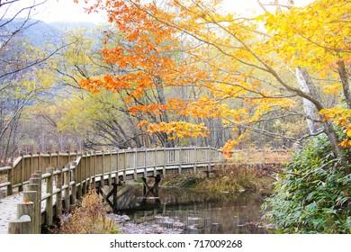 Natural scene of autumn leave (fall) in Kamikochi, Matsumoto, Japan