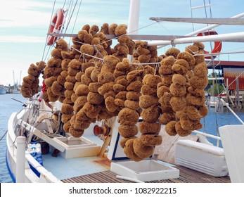 Natural sea sponges in Tarpon Springs, Florida, U.S.A.