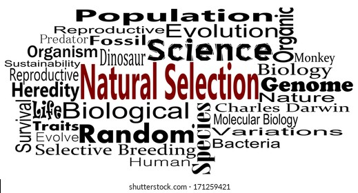 Theory Of Natural Selection Images Stock Photos Vectors