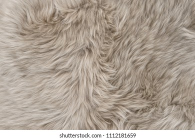 Natural sheepskin rug background. Wool texture. Sheep fur
