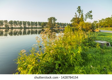 Natural shoreline on Zegerplas a man-dug lake for sand extraction in Alphen aan den Rijn, the Netherlands with overgrowth of Valerian, Valeriana officinalis, in the warm light of sunrise