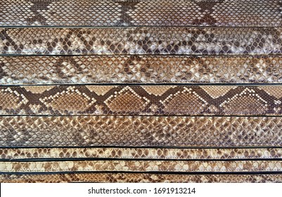 natural snake skins background full frame. Collection of leather belts with snake skin texture close up.