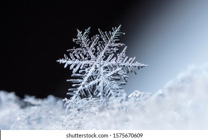 natural snowflakes on snow, winter