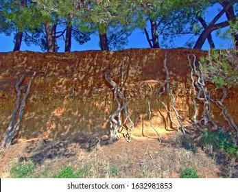 Natural soil layer and pine roots along the seashore, Sv. Filip i Jakov - Croatia (Prirodni sloj zemlje i korijenje borova uz morsku obalu, Hrvatska) - Shutterstock ID 1632981853