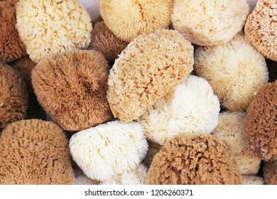 Natural sponge in different sizes creating a pattern