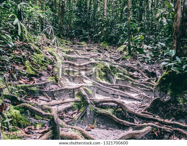 Natural Stairway Jungle Stairway Made Roots Nature Stock Image 1321700600