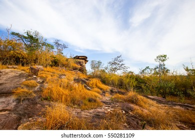 Natural stone with dry grass.