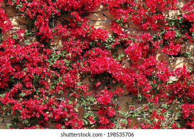 natural stone wall with bougainvillea
