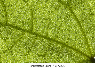 Natural structure of green leave