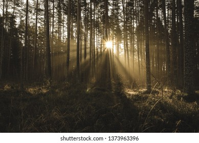 natural sun light rays shining through tree branches in summer morning with rain drops on wet foliage - vintage retro look