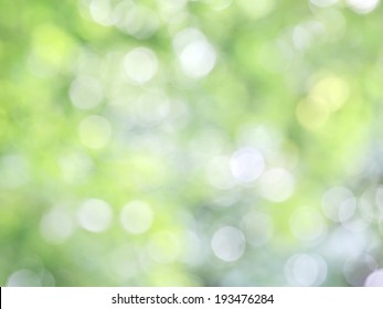 natural sunlight through trees background