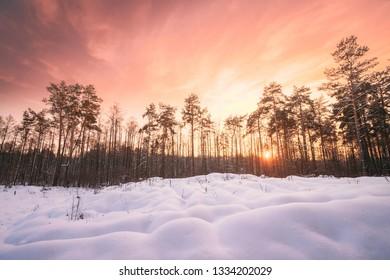Natural Sunset Sunrise Over Forest. Pink Color Sky Over Winter Snowy Wood. Landscape Under Sky At Sunset Dawn Sunrise.