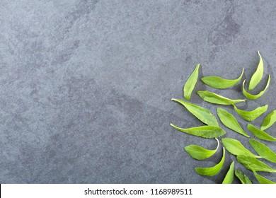 Natural sweetener in powder from stevia plant - Stevia rebaudiana. Top view
