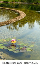 Natural swimming pond or natural swimming pool - NSP - purifying water without chemicals through biological filters and plants