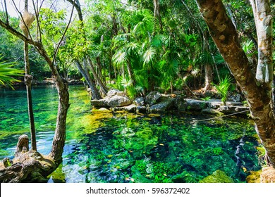Natural swimming pool called cenote with amazing crystal clear sweet water, having a strong contrast, located on yucatan peninsula, mexico.