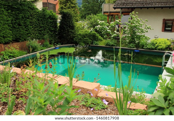 Natural Swimming Pool Plants Stock Photo Edit Now 1460817908