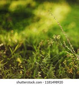 Natural texture of autumn grass