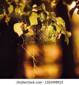 Natural texture of autumn leaves. The web is in the letter