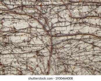 natural texture for background image