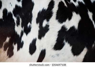 A natural texture of the cow's skin