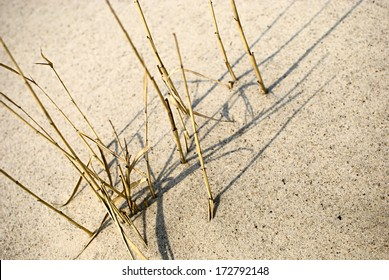 Natural texture, yellow dry reed stems in sand