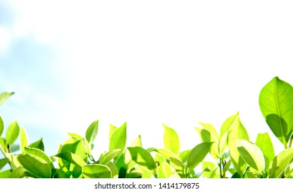 Natural theme, fresh green leaf on blurred blue sky background, with some space for texting.