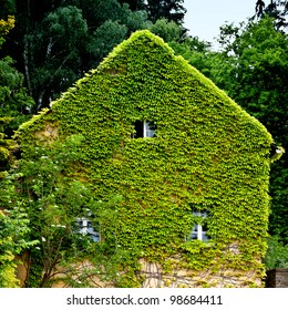 Natural thermal insulation of an older house. Green ivy is rambling at the facade.
