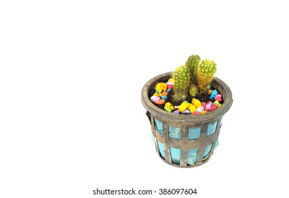 Natural Three Cactus Plants on isolate background.