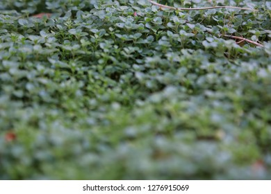 500 Tiny Plants Pictures Royalty Free Images Stock Photos And
