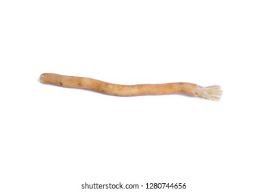Natural toothbrush Miswak (Kayu Sugi) on white background with selective focus. It is a teeth cleaning twig made from the Salvadora persica tree and also know as miswaak, siwak, Sugi or sewak.
