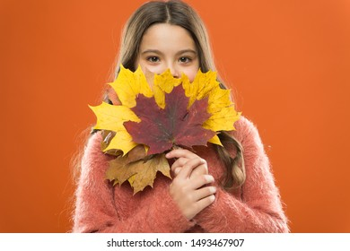 Natural treasures. Changes in nature. Cute happy smiling kid playing with leaves. Fall symbol. Happy little girl with maple leaves. Small child hold autumn leaves. Simple bouquet. Collecting leaves.