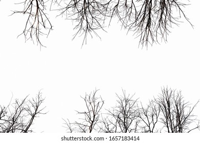 natural tree background of dry tree branch in fall