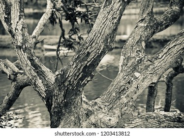 Natural tree branches isolated unique black and white photo