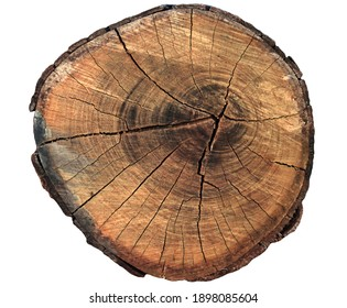 Natural tree ring texture background