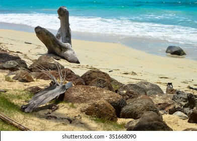Natural tree sculpture on a beautiful tropical beach on a small remote Great Corn Island in the Caribbean Sea, Nicaragua.Central America