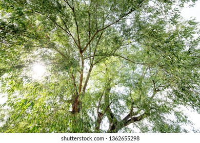 Natural tree tops in the Park with the sun