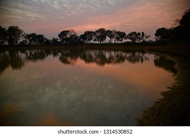 Natural trees with afternoon skylight reflection in water of a lake
