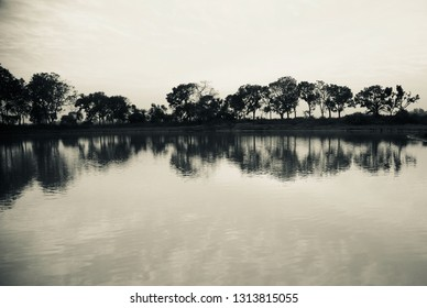 Natural trees with reflection in water around a lake