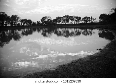 Natural trees with reflection in water of a lake black and white photo