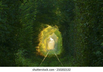 Natural tunnel formed by trees in Romania.