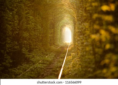 Natural tunnel of love formed by trees in Ukraine, Klevan.